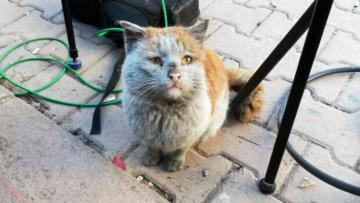 Depremde yaralanan kediyi Antalya sahiplendi