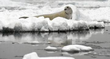 Antarktika'ya yaz geldi!