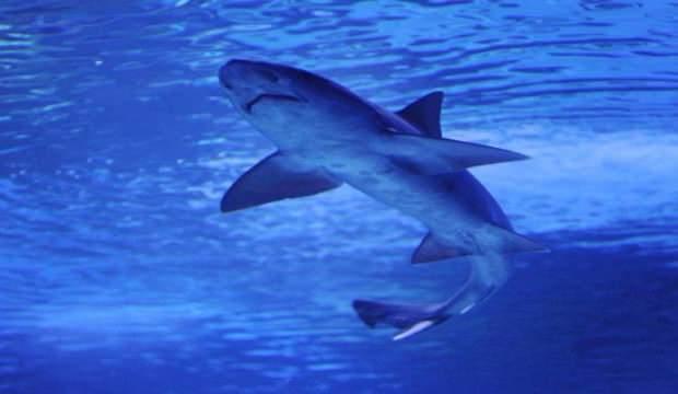150 milyon yıllık köpek balığı fosili keşfedildi