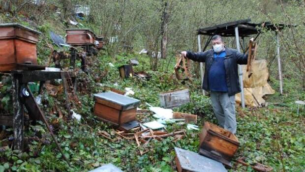 Boz ayı bahçeye girdi! 30 kovanı parçaladı