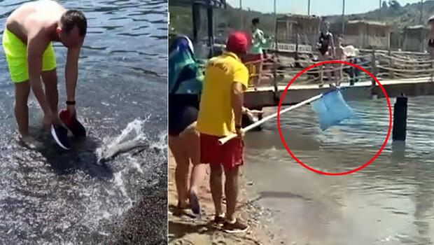 Akdeniz'de balon balığı tehlikesi