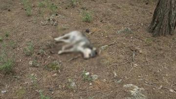 Antalya'da vahşet! 5 sokak köpeği zehirlenerek öldürüldü